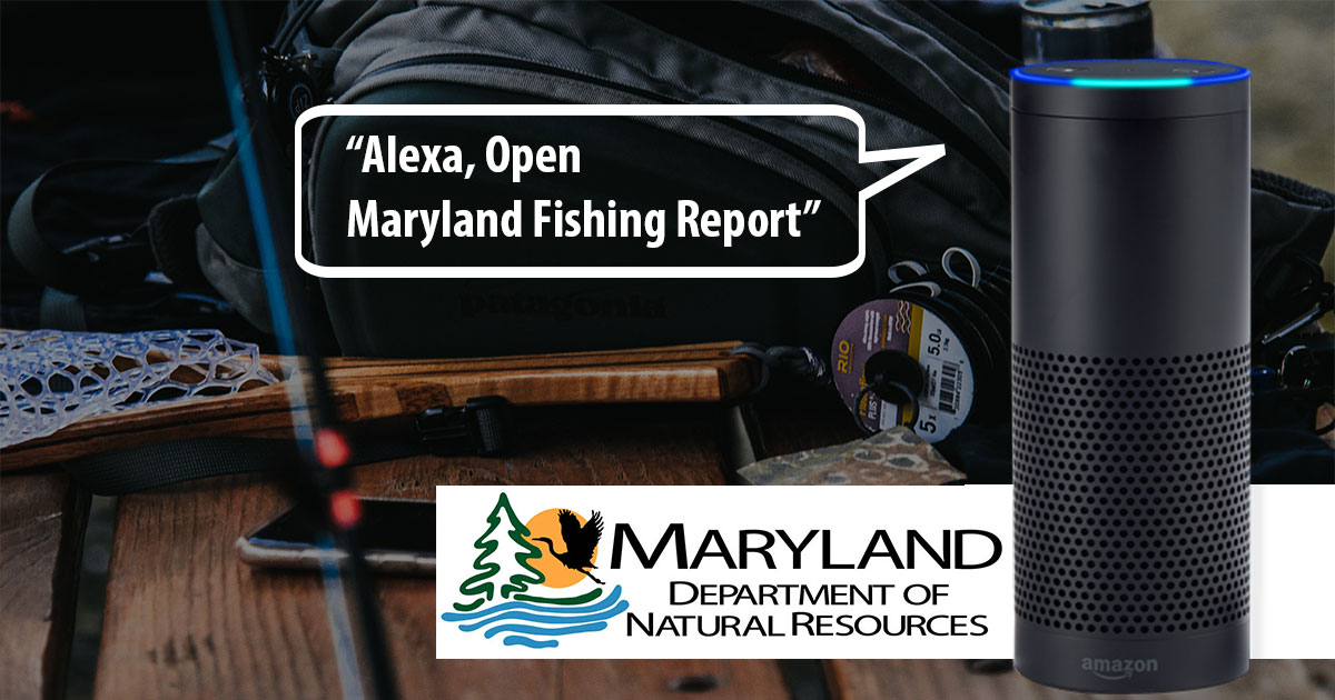 542018 u2014 Maryland Fishing Report Now Available
